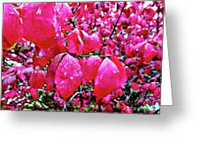 Rose Red 2 Greeting Card