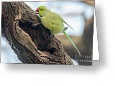 Rose-ringed Parakeet 03 Greeting Card