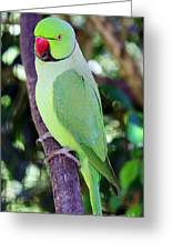Rose-ringed Parakeet Greeting Card