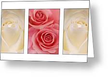 Rose Series  Greeting Card