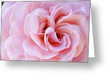 Rose Spiral Art Pink Roses Floral Baslee Troutman Greeting Card