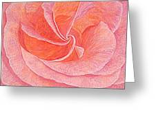 Rose Sprial Pink Fine Art Print Giclee Garden Flower Floral Botanical Love Romance Greeting Card