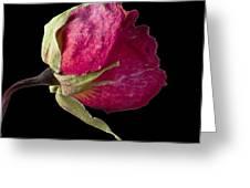 Rose Still Life Greeting Card by Robert Ullmann