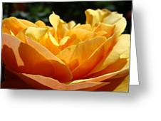 Rose Sunlit Orange Rose Garden 7 Rose Giclee Art Prints Baslee Troutman Greeting Card