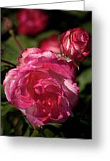 Rose To The Occasion Greeting Card