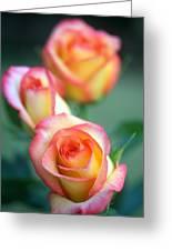 Rose Trio Greeting Card by Kathy Yates