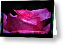 Rose Tryptich Greeting Card