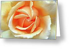 Rose Unfolding Greeting Card