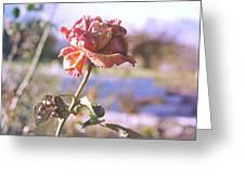 Rose. Greeting Card