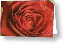 Rose Waiting In The Rain Greeting Card