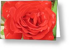 Rose With Dew Greeting Card