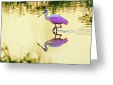 Roseate Spoonbill At Sunrise Greeting Card