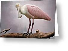 Roseate Spoonbill Costa Rica Greeting Card
