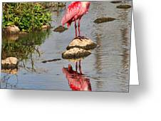 Roseate Spoonbill Reflections Greeting Card