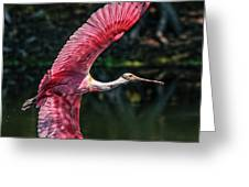 Roseate Spoonbill Greeting Card