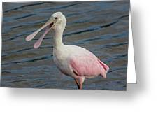 Roseate Spoonbill With Something To Say Greeting Card