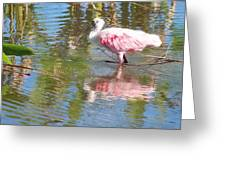 Roseate Spoonbill Young Adult Greeting Card