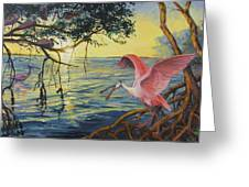 Roseate Spoonbills Among The Mangroves Greeting Card