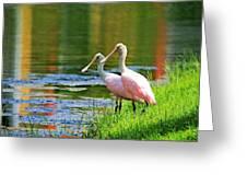 Roseate Spoonbills Greeting Card