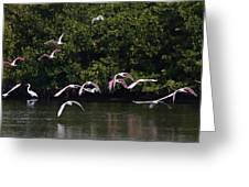 Roseates Takeoff From Sanibel  Greeting Card