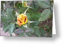 Rosebud #2 Greeting Card