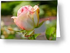 Rosebud Pale Pink Greeting Card