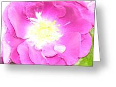 Rosegarden No. 24 Greeting Card