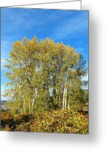 Rosehips And Cottonwoods Greeting Card