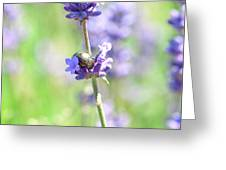 Rosemary And Lavender Greeting Card