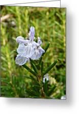 Rosemary Bloom Greeting Card