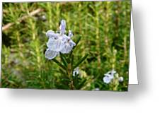 Rosemary Bloom Greeting Card