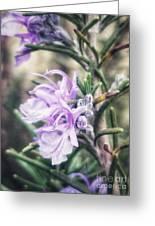 Rosemary Blooming Greeting Card