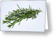 Rosemary Isolated On White Greeting Card