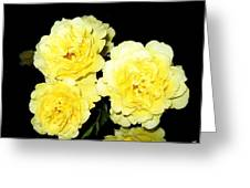 Roses 11 Greeting Card