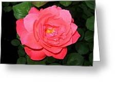 Roses 12 Greeting Card