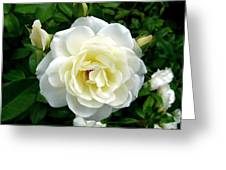 Roses 2 Greeting Card