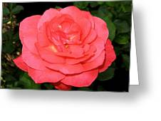 Roses 3 Greeting Card