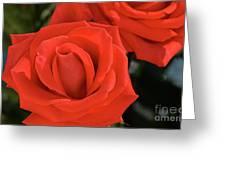 Roses-5814 Greeting Card