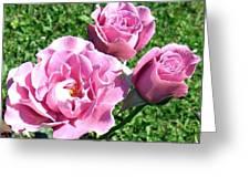 Roses 6 Greeting Card