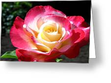 Roses 7 Greeting Card