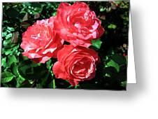 Roses 9 Greeting Card