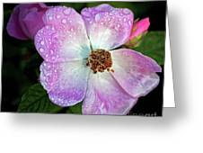 Roses After The Rain Greeting Card
