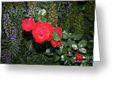 Roses Among Greeting Card by Cynthia Marcopulos