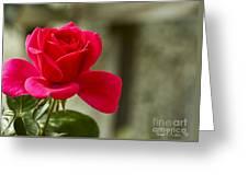 Red Rose Wall Art Print Greeting Card