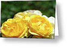 Roses Art Prints Canvas Sunlit Yellow Rose Flowers Baslee Troutman Greeting Card