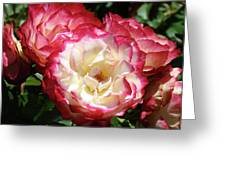 Roses Art Prints Pink White Rose Flowers Gifts Baslee Troutman Greeting Card