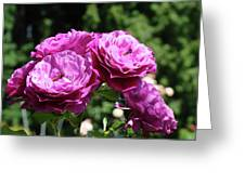 Roses Art Rose Garden Pink Purple Floral Prints Baslee Troutman Greeting Card