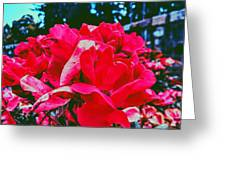 Roses At Mont Alto Greeting Card