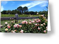 Roses At Rusack Vineyards Greeting Card