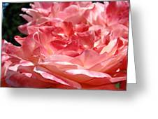 Roses Cinnamon Pink Rose Flowers 3 Rose Garden Art Baslee Troutman Greeting Card